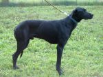 LEE - Krycí pes Pavla Pfeifera