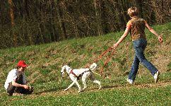 Holky mají radost z obojků Mushgo :) Žádná štěňata..