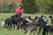 Marlie si hraje se psy