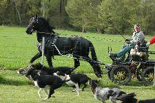 Běžný provoz - frísák projíždí kolem smečky psů za 160 cm plotem