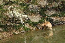 Psi Reiniho Manscheima v centrálním -výběhu-